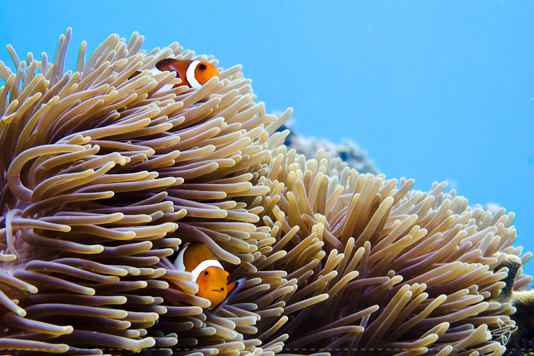 photo of the day // finding nemo