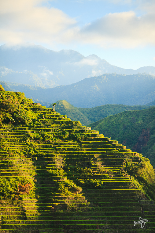 photo of the day // batad rice terraces